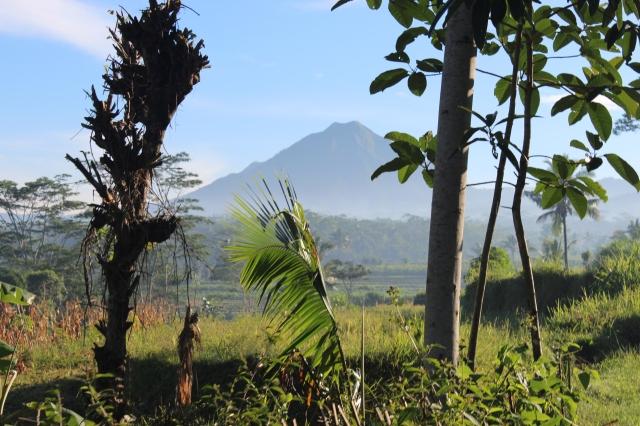Lanskap Desa  Donorojo